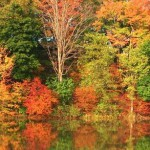 fall-leaves-7558000